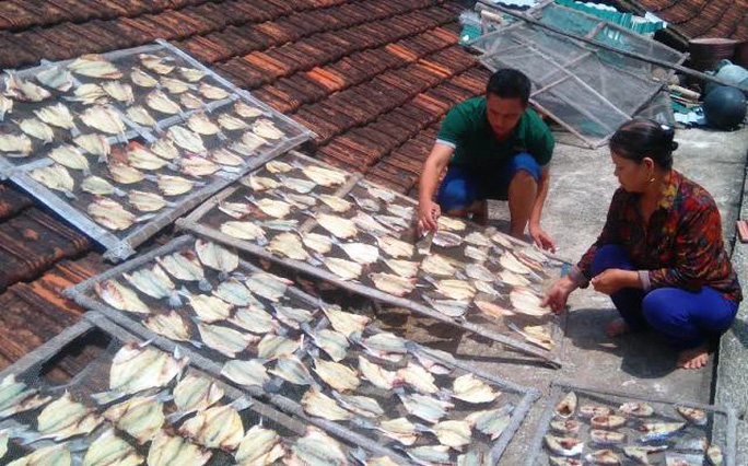 Cá lồng chết ở xã đảo Nghi Sơn - Thanh Hóa được người dân mổ thịt phơi khô làm thức ăn
