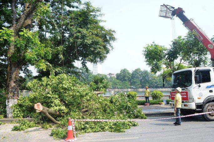 Có 109 cây xanh sẽ bị di chuyển hoặc chặt hạ tại đường Kim Mã