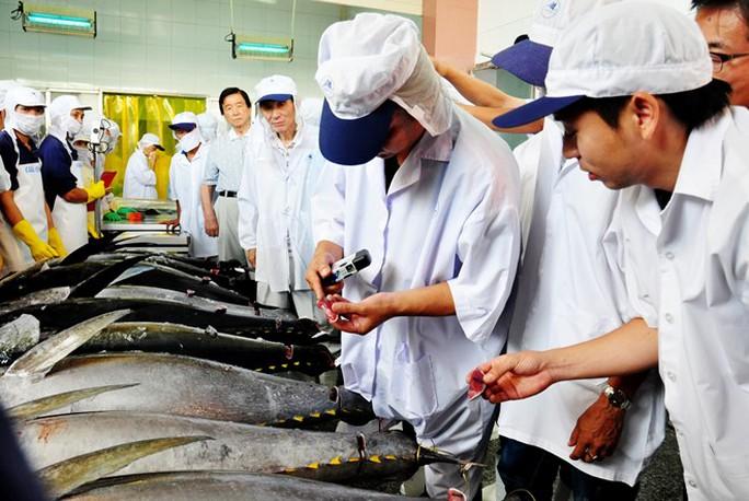 Các chuyên gia Nhật Bản kiểm tra chất lượng cá ngừ đại dương tại Bình Định. Ảnh:Minh Hoàng.