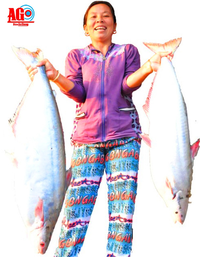 Những con cá to được anh Sơn thu mua giao tại các chợ và nhà hàng