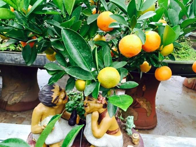 Chi hàng chục triệu đồng cho một cây quất bonsai chơi Tết