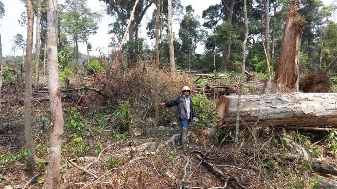Một khoảng rừng tại thôn Đắk Re, xã Hiếu bị chặt hạ, đốt cháy nham nhở