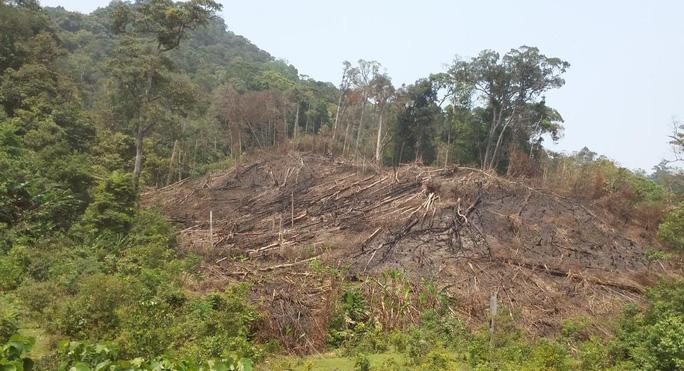 Sườn đồi với nhiều cây gỗ lớn bị san phẳng