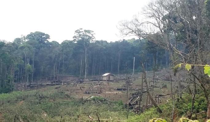Thậm chí, nhiều nơi người dân còn làm chòi đểtiện việc... phá rừng