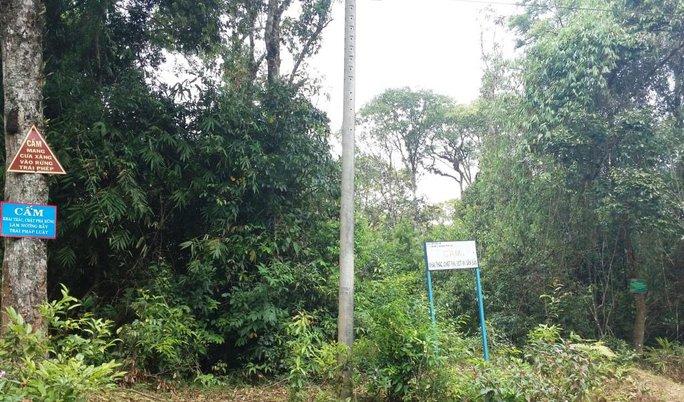 Một chỗ gắn tới 4 biển cấm và thông báo, nhưng rừng xung quanh vẫn bị hủy hoại