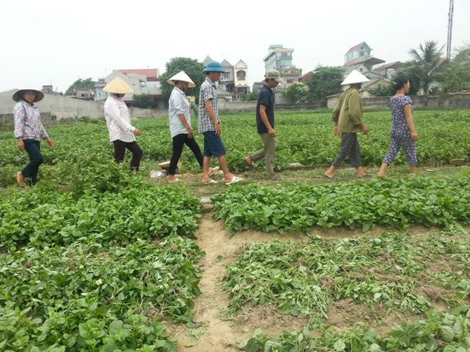 Người dân xã Vĩnh Thành, huyện Vĩnh Lộc trên cánh đồng rau ngày 12-5