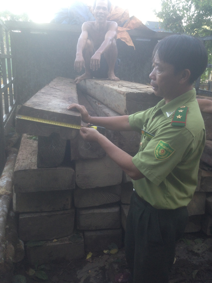 Kiểm tra khối lượng gỗ. Ảnh do kiểm lâm cung cấp