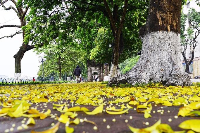 Mùa thu Hà Nội với lá vàng bay làm nao lòng xiết bao người