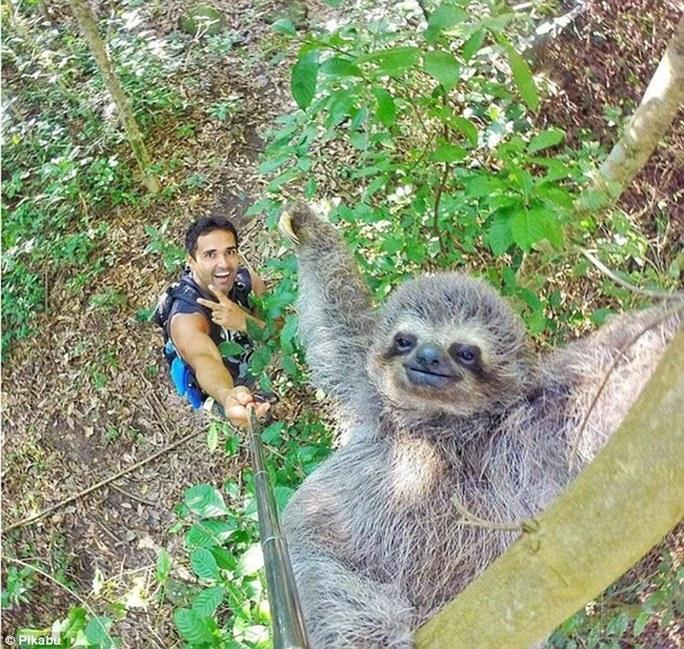 Một người đàn ông chụp hình với lười trong rừng Nam Mỹ. Ảnh: Pikabu