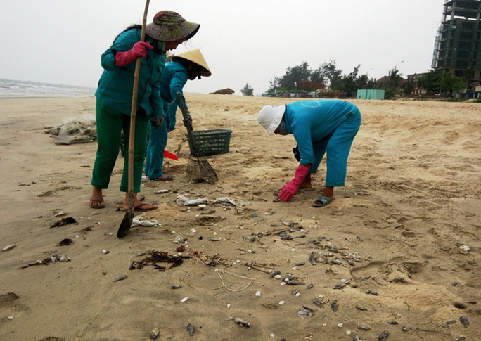 Công nhân môi trường liên tục vớt cá chết, quét dọn để tránh gây ô nhiễm