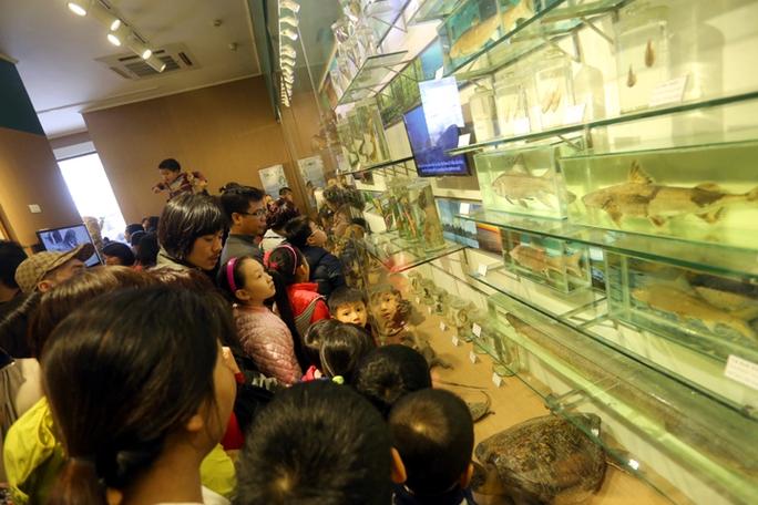 Mọi người chen chân nhau vào xem các mẫu vật đại dương