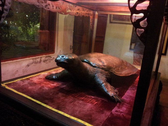 Tiêu bản rùa được trưng bày ở đền Ngọc Sơn