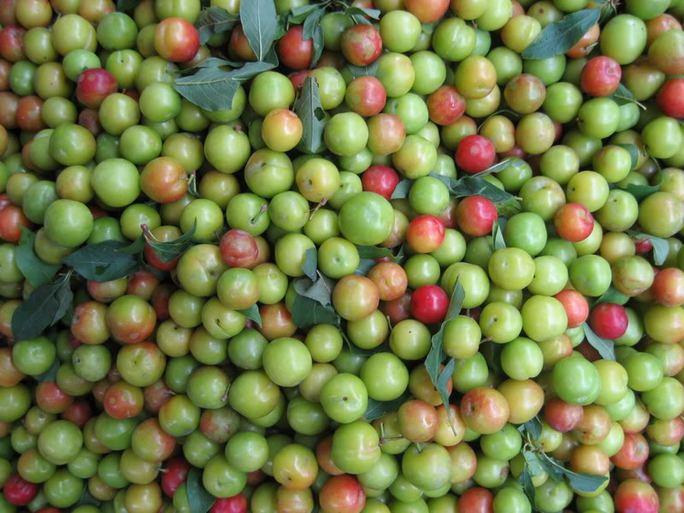 Mận cơm của Việt Nam xuất hiện sớm, trước cả thời điểm mận tam hoa vào vụ thu hoạch