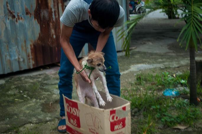 Một con chó được tình nguyện viên giải cứu