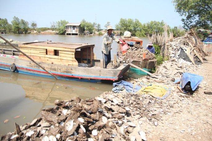 Nông dân xót xa đổ vỏ hàu lên bờ- Ảnh: Mậu Trường