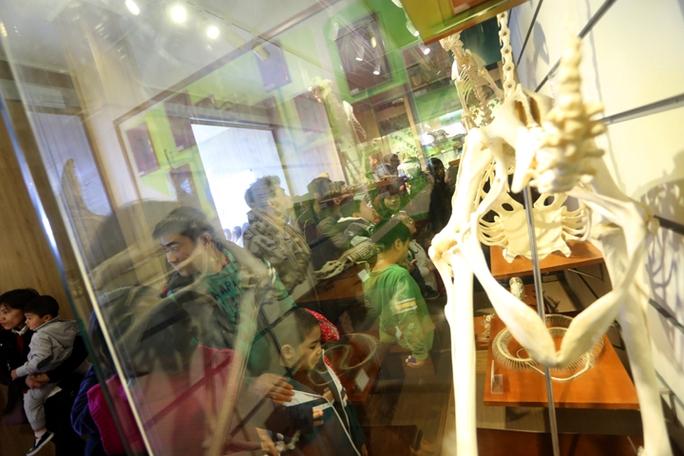 Mẫu vật xương hổ Đông Dương trưng bày tại Bảo tàng