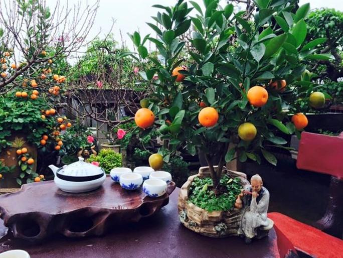 Những cây quất bonsai có dáng và thế độc đáo trị giá hàng chục triệu đồng được người dân thủ đô ưa chuộng