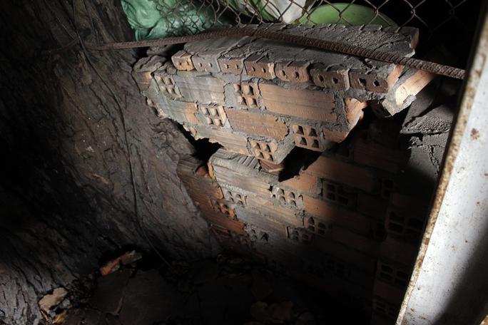 Thân cây, rễ cây lớn dần đôn vỡ các bức tường, phá vỡ nền gạch bên dưới.