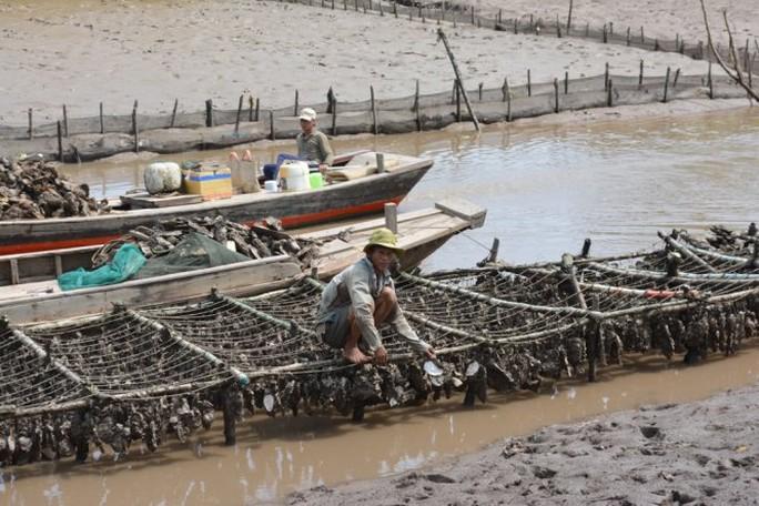 Ông Nguyễn Văn Chánh, ngụ ấp Thừa Thạnh, bị thiệt hại 10 tấn hàu, tương đương 200 triệu đồng- Ảnh: Mậu Trường