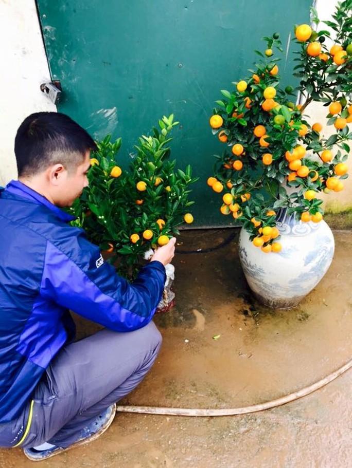 Anh Tuấn Anh (Tứ Liên, Q.Tây Hồ, Hà Nội) đang đưa 2 cây quất bonsai ra ngoài cho khách đặt mua