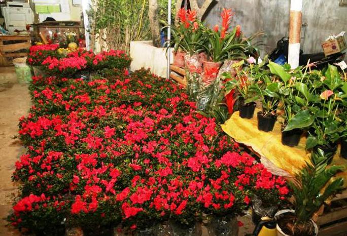 Cửa hàng bán hoa, cây cảnh, cây giống ế ẩm nhiều do người mua rất ít