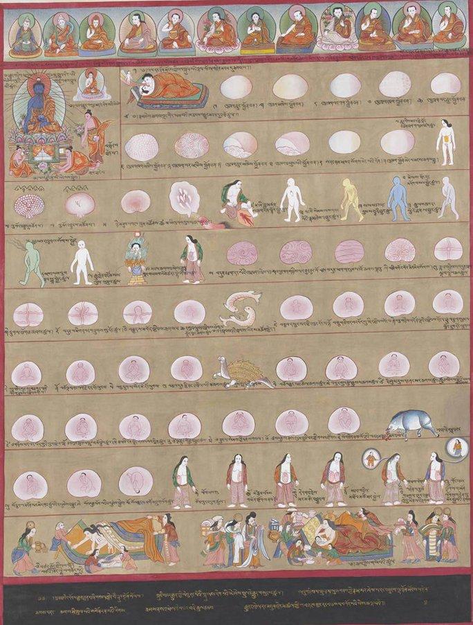 Đồ hình phát triển bào thai theo y lý Tây Tạng. Ảnh: INTERNET