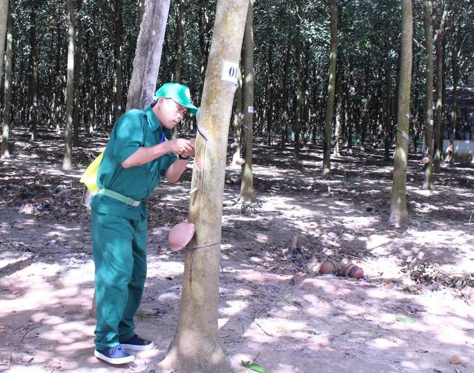 Công nhân cạo mủ cao su tham gia hội thi thợ giỏi thu hoạch mủ cấp ngành do VRG và Công đoàn Cao su Việt Nam tổ chức