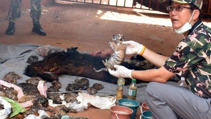 Ít nhất 40 xác hổ con, xác 1 con gấu và sừng của một số động vật khác được tìm thấy. Ảnh: Reuters
