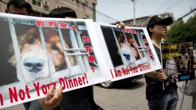 Người dân Trung Quốc kêu gọi tẩy chay lễ hội thịt chó. Ảnh: AP