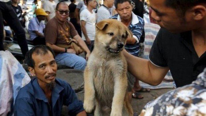 Những người ủng hộ cho rằng việc ăn thịt chó cũng giống như việc ăn thịt loài vật khác. Ảnh: Reuters