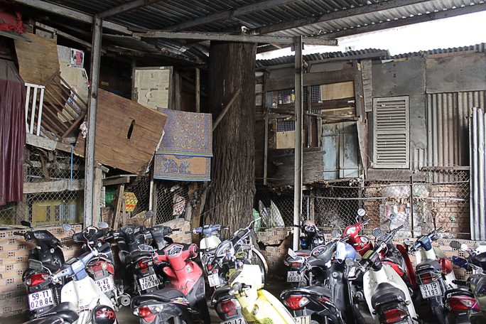 Một cây cổ thụ khác mọc bên trong nhà giữ xe của bà Nguyễn Thị Lệ. Người dân khu vực này phải đục mái tôn để thân cây lọt qua mái nhà.