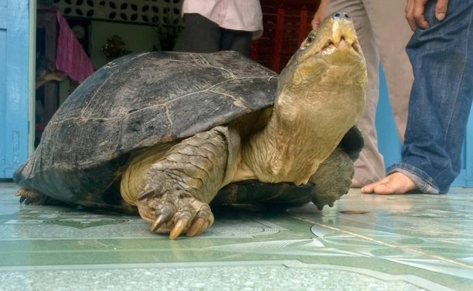 Con rùa do anh Minh bắt được