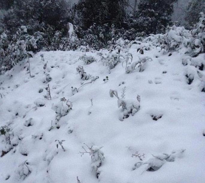 Tuyết phủ trắng cây cỏ