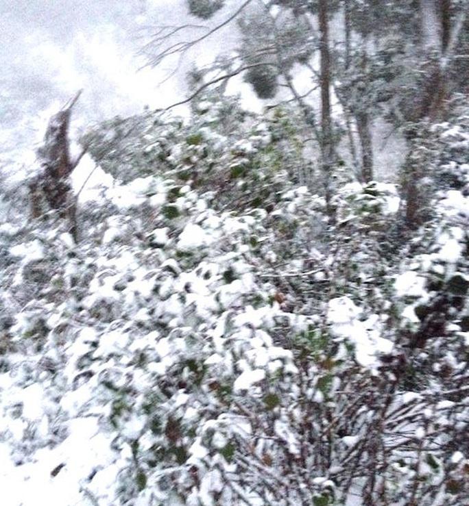 Tuyết dày phủ trắng cây