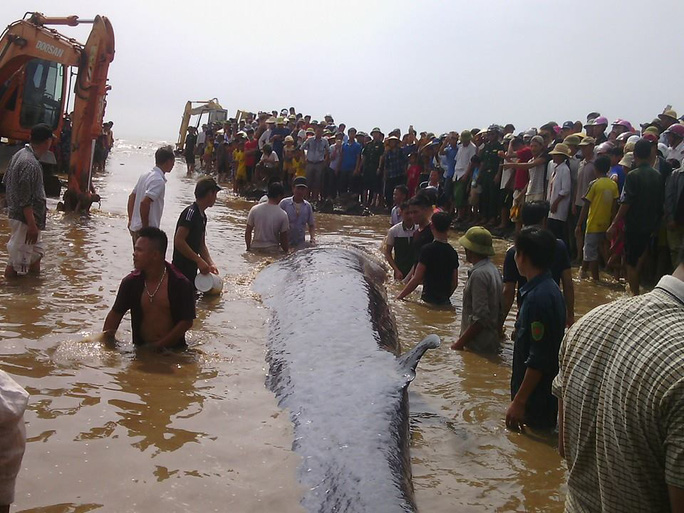 Người dân đang tìm mọi cách đưa cá ra biển.
