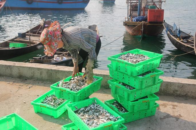 Cá được người dân Hà Tĩnh đánh bắt về chỉ bán được với giá rẻẢnh: Đức Ngọc