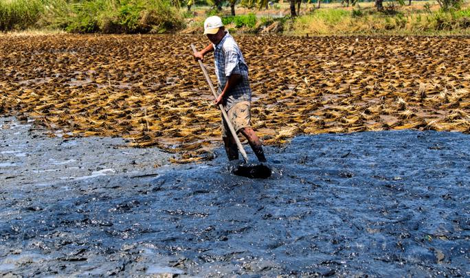 Anh Lâm Tùng Hiếu, ở thị trấn Thứ 11, huyện An Minh, đang cải tạo ruộng lúa để đào ao nuôi tôm