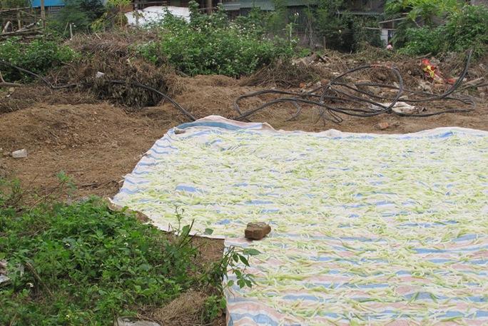 Ở bãi đất vứt đủ các loại phế thải