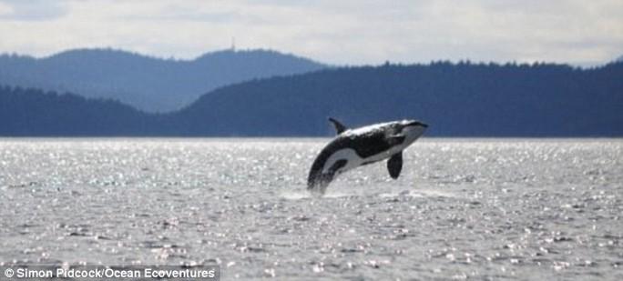 Các nhà khoa học tiến hành nghiên cứu Granny từ năm 1971. Ảnh Ocean Ecoventures