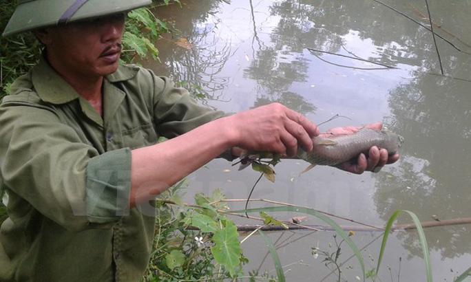 Cá trên các con suối ở huyện Cao Phong, tỉnh Hòa Bình chết vì Nhà máy Chế biến đồng An Phú