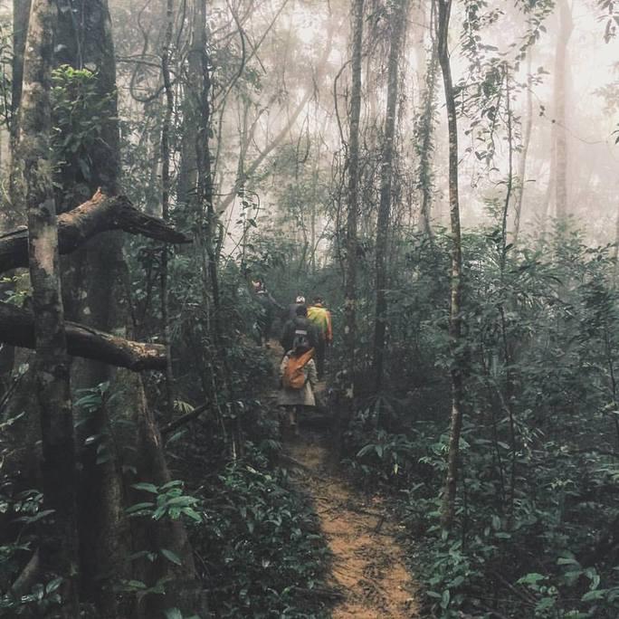 Nhóm người trên vào rừng bẫy bắt động vật hoang dã trái phép - ảnh nguồn tin cung cấp