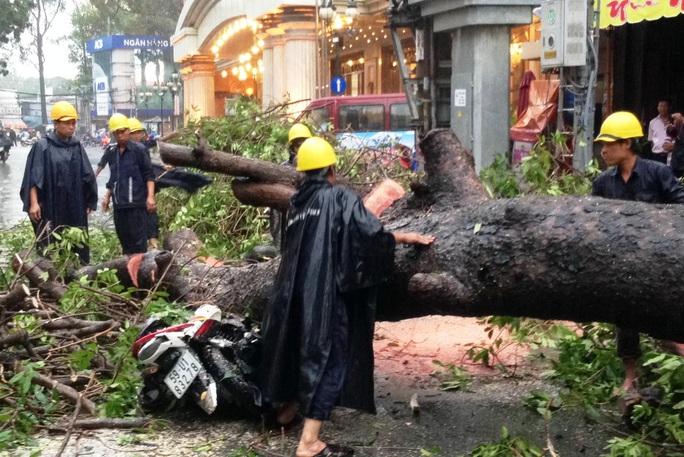 Chiếc xe máy bị cây xanh đè bẹp, chủ xe được người dân đưa đi cấp cứu