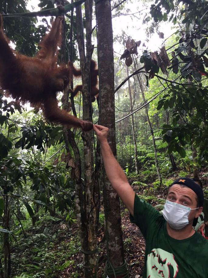 Leonardo thăm rừng nhiệt đới Leuser