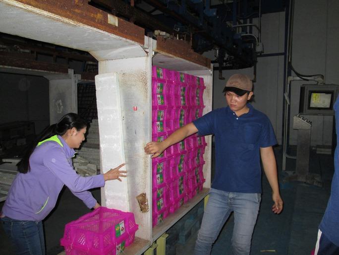 Vải được chiếu xạ tại nhà máy Sơn Sơn - Ảnh mùa vải năm 2015