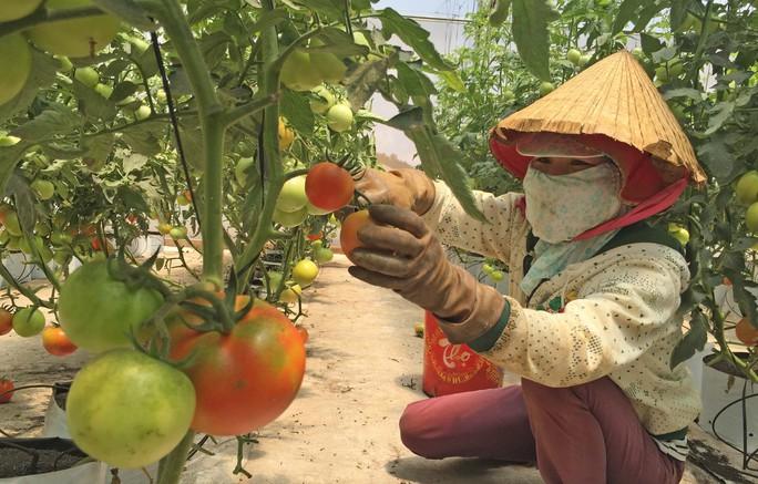 Mô hình nông nghiệp công nghệ cao ở Lâm Đồng