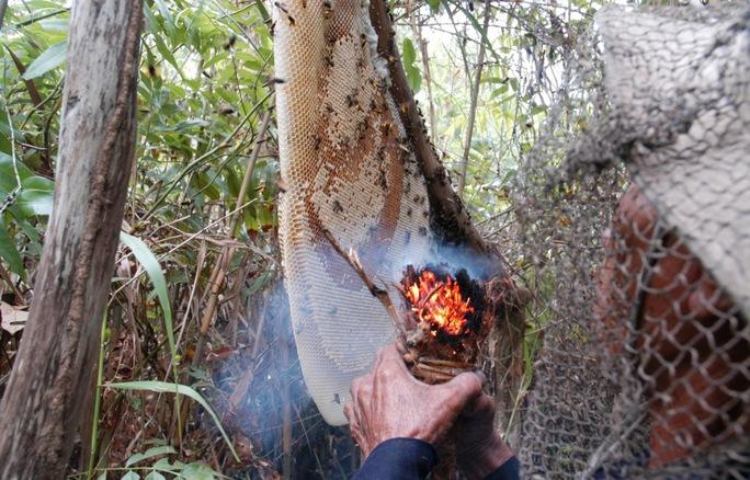 Để bảo vệ rừng, người ăn ong ở U Minh Hạ không đốt đuốc tạo khói mà dùng rễ phụ từ cành của cây gừa phơi khô, đập dập mà đốt