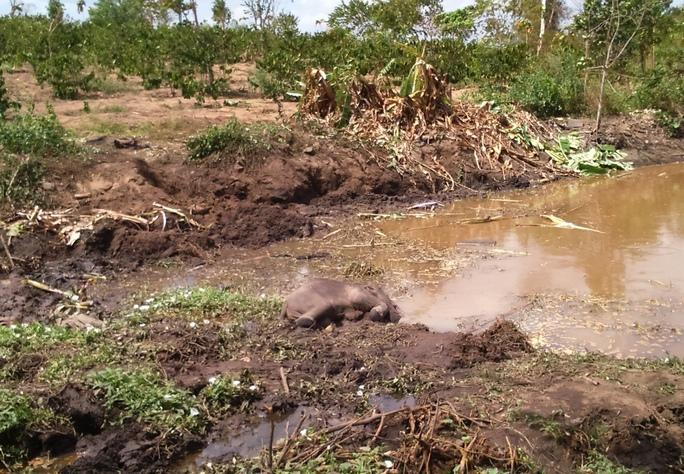 Chú voi con được phát hiện chết bên mép hồ