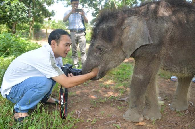Gold (vàng) là tên gọi của chú voi con khi được đưa về chăm sóc tại Trung tâm Bảo tồn voi Đắk Lắk