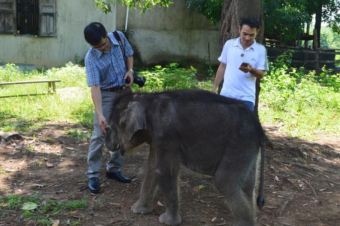 Chú voi con này rất thân thiện, đáng yêu. Chú thường quấn quyết với con người. Hiện Gold được hơn 1 tuổi, nặng hơn 100kg