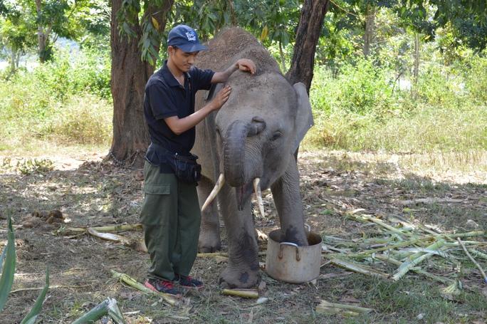 June (tháng 6) là chú voi con thứ 2 đang được chăm sóc tại Trung tâm Bảo tồn voi Đắk Lắk. June hiện hơn 6 tuổi